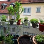 Wild Urban Gardening ·Teil 3