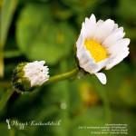 Natur & Genuss: Adventsgewinnspiel zum 2. Advent