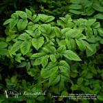 Natur & Genuss: Adventsgewinnspiel zum 1. Advent