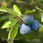 Natur & Genuss: Adventsgewinnspiel zum 4. Advent